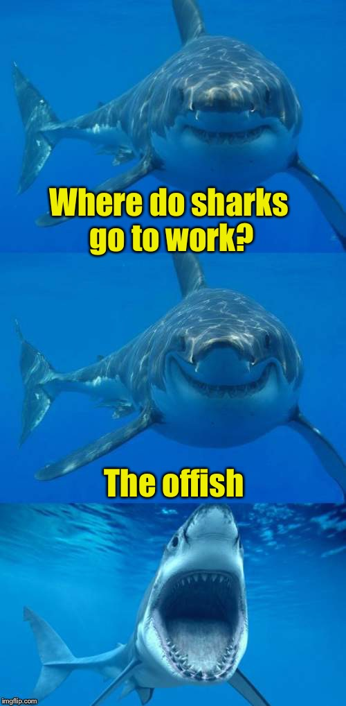 Bad Shark Pun  | Where do sharks go to work? The offish | image tagged in bad shark pun | made w/ Imgflip meme maker