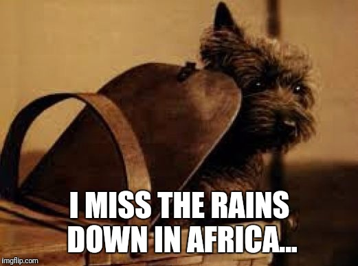Toto Basket Wizard of Oz | I MISS THE RAINS DOWN IN AFRICA... | image tagged in toto basket wizard of oz | made w/ Imgflip meme maker