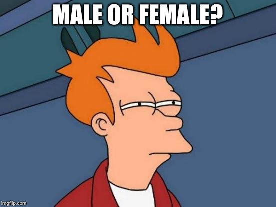Futurama Fry Meme | MALE OR FEMALE? | image tagged in memes,futurama fry | made w/ Imgflip meme maker