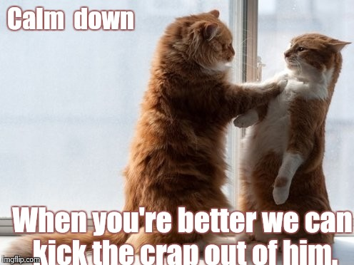 Sincere Cats | Calm  down When you're better we can kick the crap out of him. | image tagged in sincere cats | made w/ Imgflip meme maker