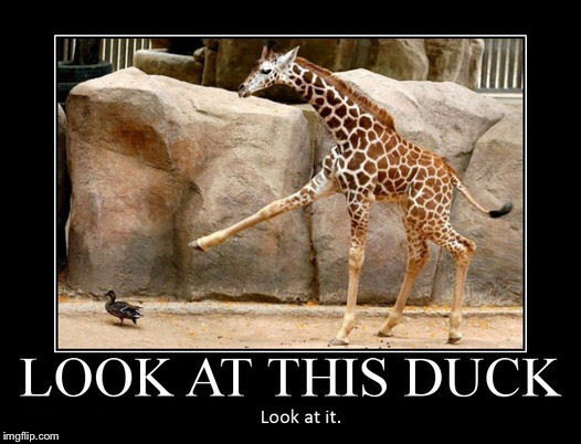 LOOK AT THIS DUCK LOOK AT IT | image tagged in memes,demotivationals,duck,giraffe | made w/ Imgflip meme maker