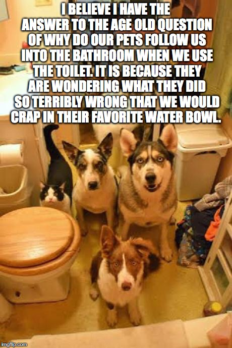 pet question | I BELIEVE I HAVE THE ANSWER TO THE AGE OLD QUESTION OF WHY DO OUR PETS FOLLOW US INTO THE BATHROOM WHEN WE USE THE TOILET. IT IS BECAUSE THE | image tagged in pets | made w/ Imgflip meme maker