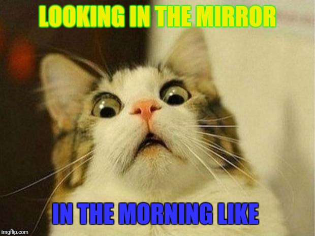 Scared Cat Meme | LOOKING IN THE MIRROR IN THE MORNING LIKE | image tagged in memes,scared cat | made w/ Imgflip meme maker