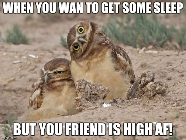 High owl friend | WHEN YOU WAN TO GET SOME SLEEP BUT YOU FRIEND IS HIGH AF! | image tagged in owl,bird,weed,sleep,annoyed,owls | made w/ Imgflip meme maker