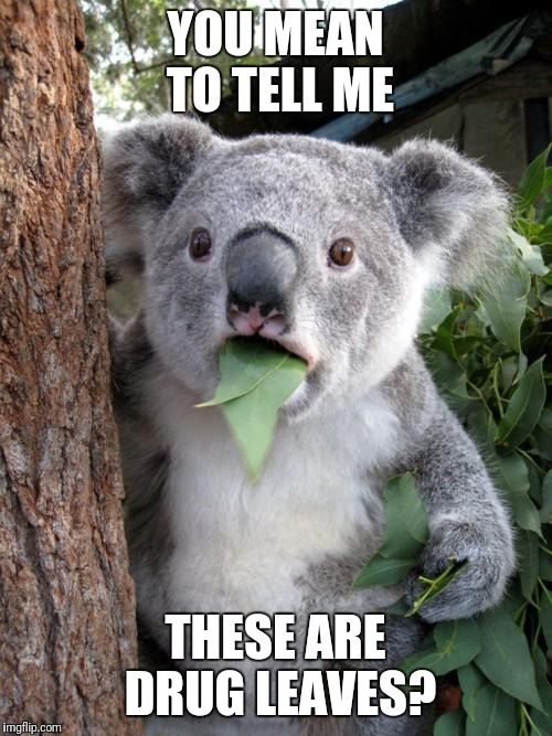 Surprised Koala Meme | YOU MEAN TO TELL ME THESE ARE DRUG LEAVES? | image tagged in memes,surprised koala | made w/ Imgflip meme maker