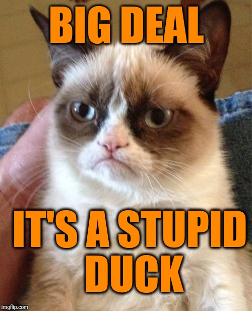 Grumpy Cat Meme | BIG DEAL IT'S A STUPID DUCK | image tagged in memes,grumpy cat | made w/ Imgflip meme maker