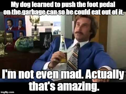 Well That Escalated Quickly | My dog learned to push the foot pedal on the garbage can so he could eat out of it. I'm not even mad. Actually that's amazing. | image tagged in memes,well that escalated quickly | made w/ Imgflip meme maker