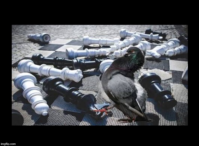 Pigeon Chess Blank Meme Template