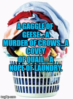 Laundry | A GAGGLE OF GEESE... A MURDER OF CROWS...A COVEY OF QUAIL... A NOPE OF LAUNDRY. | image tagged in laundry,house cleaning,chores,memes,funny,funny memes | made w/ Imgflip meme maker