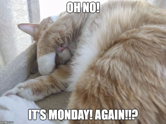 Oh no! It's Monday! Again! | OH NO! IT'S MONDAY! AGAIN!!? | image tagged in cat nose,monday | made w/ Imgflip meme maker
