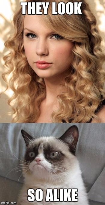 "Grumpy Cat says ""no"" to Taylor Swift as NYC Global Welcome Ambas 