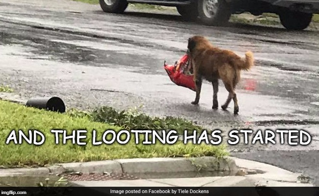 Hurricane looters | AND THE LOOTING HAS STARTED | image tagged in looters,hurricane dog | made w/ Imgflip meme maker