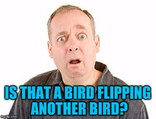 IS THAT A BIRD FLIPPING ANOTHER BIRD? | made w/ Imgflip meme maker