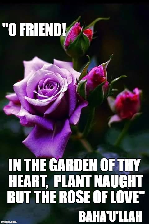 "Wise Words from the Baha'i Faith | BAHA'U'LLAH IN THE GARDEN OF THY HEART,  PLANT NAUGHT BUT THE ROSE OF LOVE"" ""O FRIEND! 