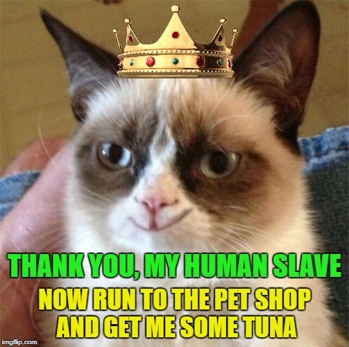 NOW RUN TO THE PET SHOP AND GET ME SOME TUNA THANK YOU, MY HUMAN SLAVE | made w/ Imgflip meme maker