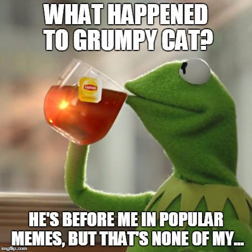 But Thats None Of My Business Meme | WHAT HAPPENED TO GRUMPY CAT? HE'S BEFORE ME IN POPULAR MEMES, BUT THAT'S NONE OF MY... | image tagged in memes,but thats none of my business,kermit the frog | made w/ Imgflip meme maker