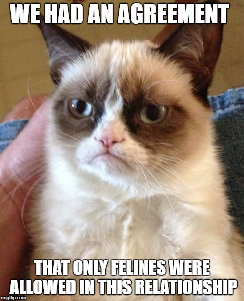 Nah uh, I don't think so | WE HAD AN AGREEMENT THAT ONLY FELINES WERE ALLOWED IN THIS RELATIONSHIP | image tagged in memes,grumpy cat,relationship,relationship status | made w/ Imgflip meme maker