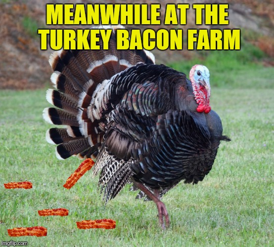 MEANWHILE AT THE TURKEY BACON FARM | made w/ Imgflip meme maker