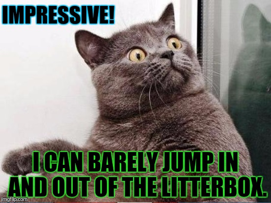 IMPRESSIVE! I CAN BARELY JUMP IN AND OUT OF THE LITTERBOX. | made w/ Imgflip meme maker