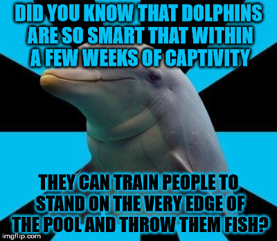 Dolphins are so smart | DID YOU KNOW THAT DOLPHINS ARE SO SMART THAT WITHIN A FEW WEEKS OF CAPTIVITY THEY CAN TRAIN PEOPLE TO STAND ON THE VERY EDGE OF THE POOL AND | image tagged in dolphin,memes,captivity,train,fish,smart | made w/ Imgflip meme maker