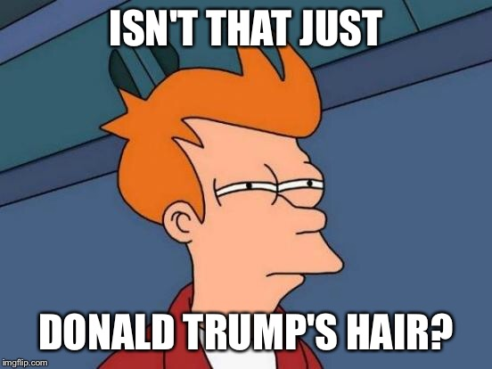 Futurama Fry Meme | ISN'T THAT JUST DONALD TRUMP'S HAIR? | image tagged in memes,futurama fry | made w/ Imgflip meme maker
