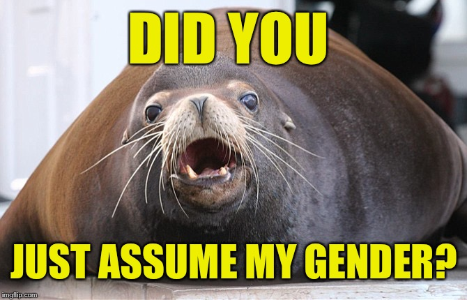 DID YOU JUST ASSUME MY GENDER? | image tagged in did you just assume my gender,she-lion,he-lion,sea-lion | made w/ Imgflip meme maker