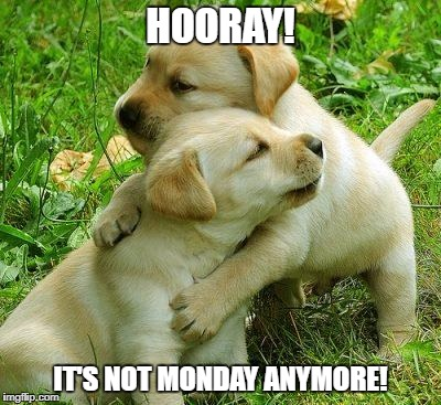 Puppy I love bro | HOORAY! IT'S NOT MONDAY ANYMORE! | image tagged in puppy i love bro | made w/ Imgflip meme maker