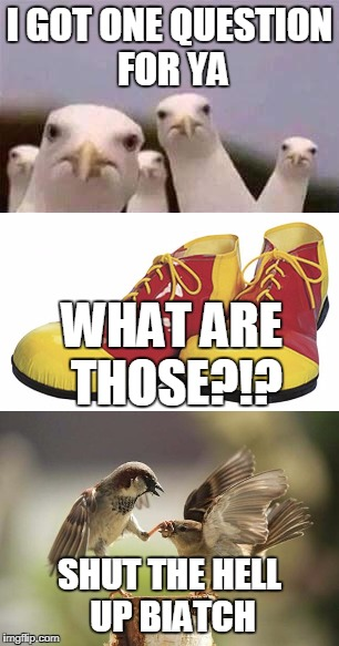 WHAT ARE THOSE bird | I GOT ONE QUESTION FOR YA SHUT THE HELL UP BIATCH WHAT ARE THOSE?!? | image tagged in birds | made w/ Imgflip meme maker