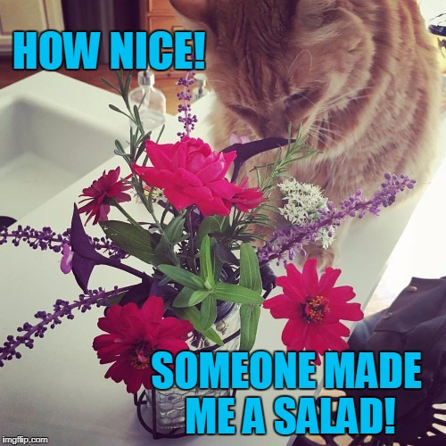 Cat salad | HOW NICE! SOMEONE MADE ME A SALAD! | image tagged in bouquetcat,memes | made w/ Imgflip meme maker