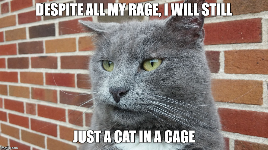 Evil Cat | DESPITE ALL MY RAGE, I WILL STILL JUST A CAT IN A CAGE | image tagged in evil cat | made w/ Imgflip meme maker