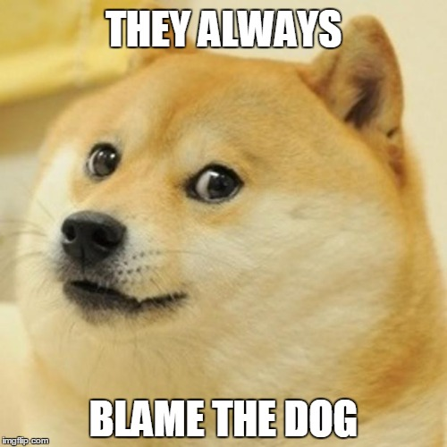Doge Meme | THEY ALWAYS BLAME THE DOG | image tagged in memes,doge | made w/ Imgflip meme maker