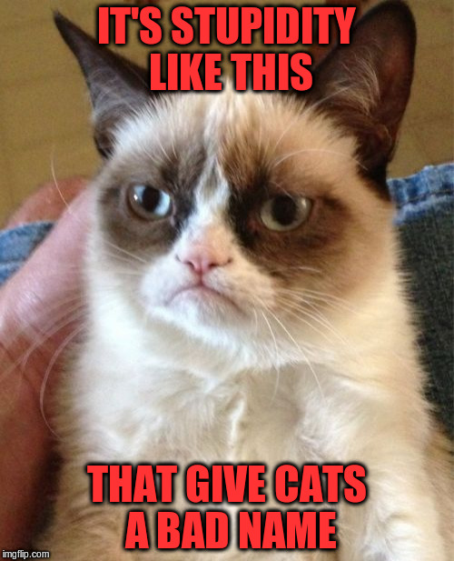 Grumpy Cat Meme | IT'S STUPIDITY LIKE THIS THAT GIVE CATS A BAD NAME | image tagged in memes,grumpy cat | made w/ Imgflip meme maker