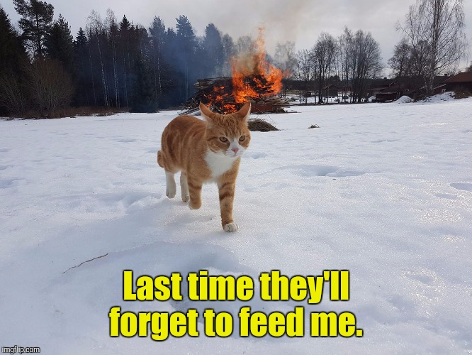 Havoc Cat | Last time they'll forget to feed me. | image tagged in havoc cat | made w/ Imgflip meme maker