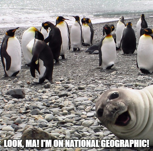 Look, Ma! | LOOK, MA! I'M ON NATIONAL GEOGRAPHIC! | image tagged in animals,funny animals,funny,funny memes | made w/ Imgflip meme maker