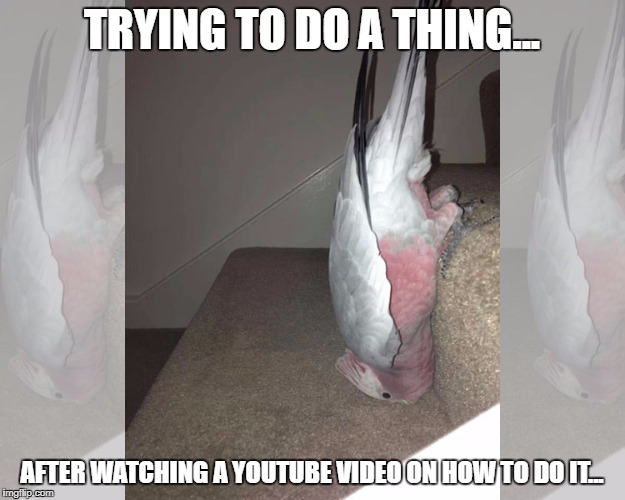 Bird Fail | TRYING TO DO A THING... AFTER WATCHING A YOUTUBE VIDEO ON HOW TO DO IT... | image tagged in animals,funny animals,funny,funny memes,funny meme | made w/ Imgflip meme maker