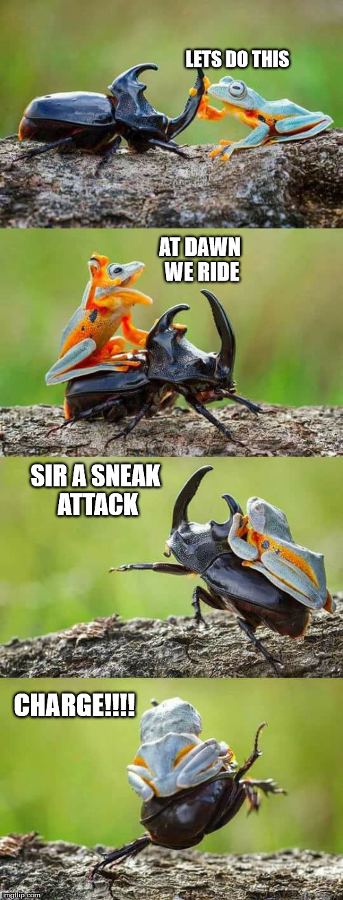 The new allys | AT DAWN WE RIDE CHARGE!!!! SIR A SNEAK ATTACK LETS DO THIS | image tagged in frog,beatle,animals,memes | made w/ Imgflip meme maker