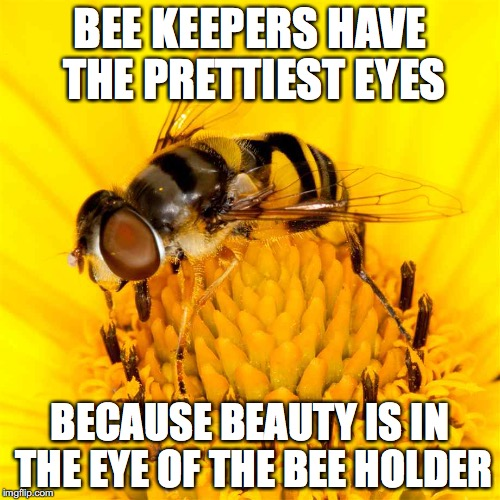 BEE KEEPERS HAVE THE PRETTIEST EYES BECAUSE BEAUTY IS IN THE EYE OF THE BEE HOLDER | image tagged in bees,dad jokes | made w/ Imgflip meme maker
