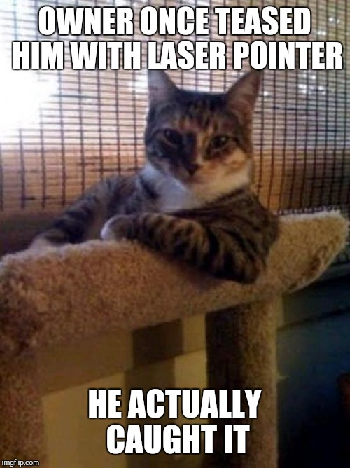 The Most Interesting Cat In The World Meme | OWNER ONCE TEASED HIM WITH LASER POINTER HE ACTUALLY CAUGHT IT | image tagged in memes,the most interesting cat in the world | made w/ Imgflip meme maker