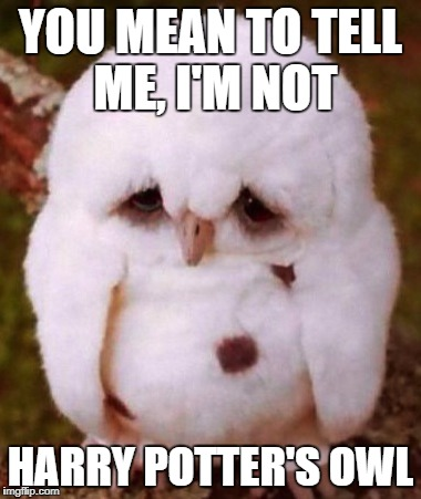 YOU MEAN TO TELL ME, I'M NOT HARRY POTTER'S OWL | image tagged in owo lwo | made w/ Imgflip meme maker