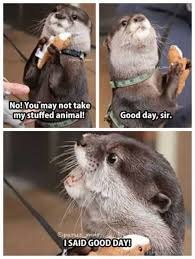 Nobody touch his stuffed animal, He will bite >u< | no! You may not take my stuffed animal! Good day, sir. I SAID GOOD DAY! | image tagged in funny,otter,stuffed animal,good day sir | made w/ Imgflip meme maker
