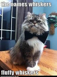 Fluffy whiskers  | image tagged in james bond,the names bond,cat,bowtie | made w/ Imgflip meme maker