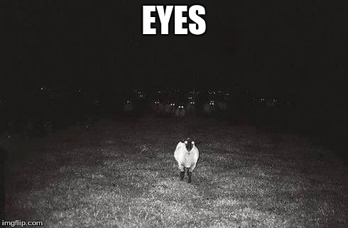 EYES | EYES | image tagged in funny,memes | made w/ Imgflip meme maker