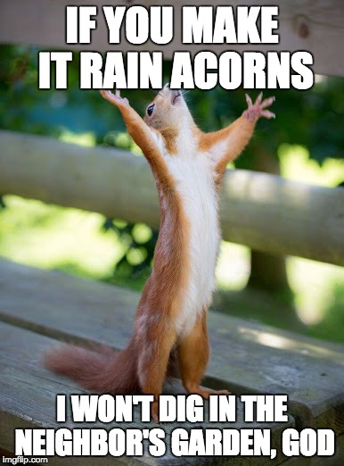 why me | IF YOU MAKE IT RAIN ACORNS I WON'T DIG IN THE NEIGHBOR'S GARDEN, GOD | image tagged in why me | made w/ Imgflip meme maker