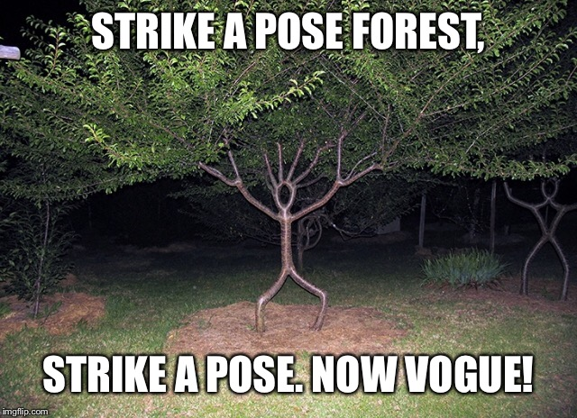 STRIKE A POSE FOREST, STRIKE A POSE. NOW VOGUE! | made w/ Imgflip meme maker
