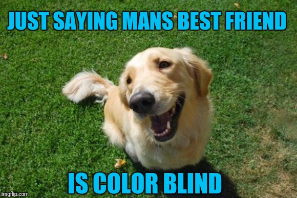 Happy Dog | JUST SAYING MANS BEST FRIEND IS COLOR BLIND | image tagged in happy dog | made w/ Imgflip meme maker