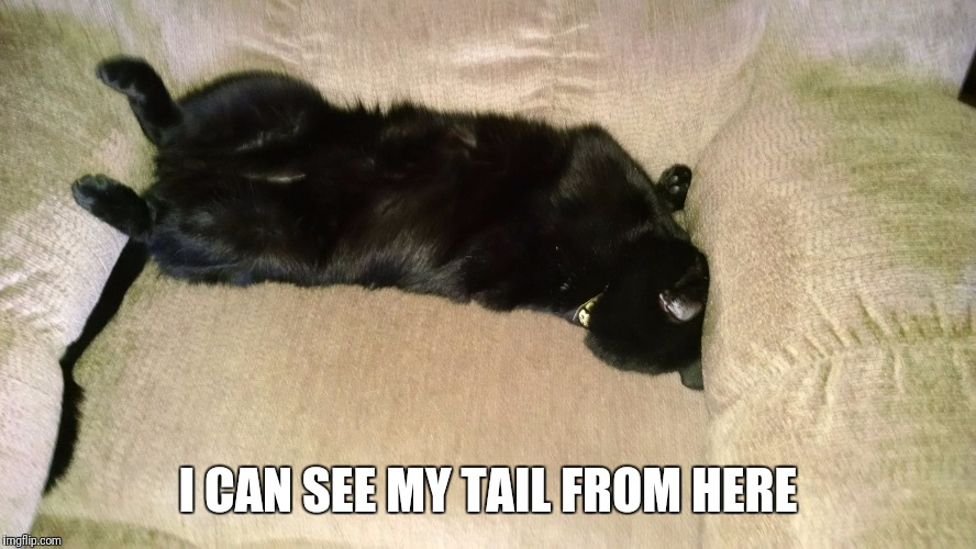I CAN SEE MY TAIL FROM HERE | image tagged in tired | made w/ Imgflip meme maker