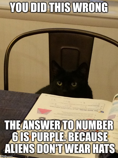 YOU DID THIS WRONG THE ANSWER TO NUMBER 6 IS PURPLE. BECAUSE ALIENS DON'T WEAR HATS | image tagged in cat,funny memes | made w/ Imgflip meme maker