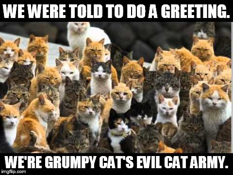 WE WERE TOLD TO DO A GREETING. WE'RE GRUMPY CAT'S EVIL CAT ARMY. | made w/ Imgflip meme maker