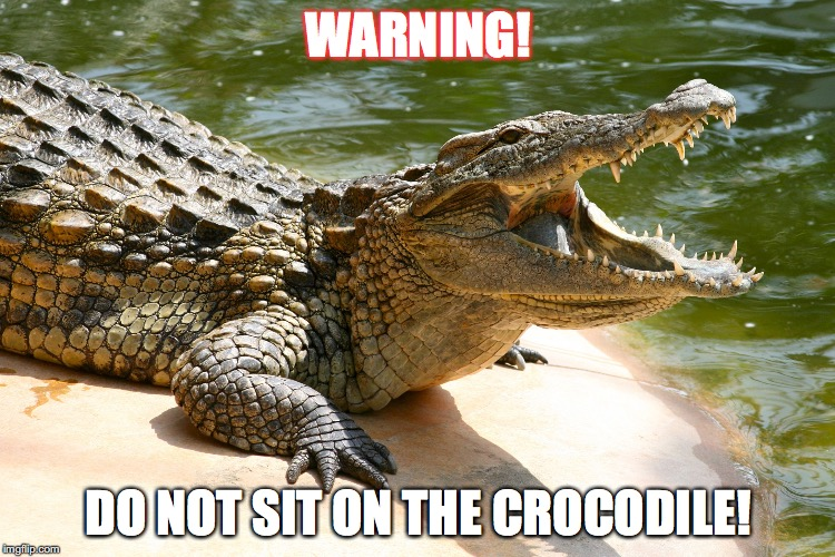 crocodile meme