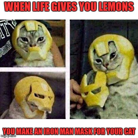 WHEN LIFE GIVES YOU LEMONS YOU MAKE AN IRON MAN MASK FOR YOUR CAT | image tagged in iron man | made w/ Imgflip meme maker